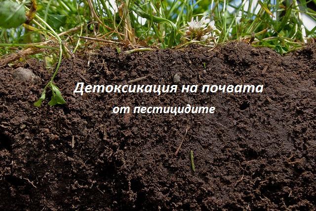 detoksikacia-ot-pesticidite