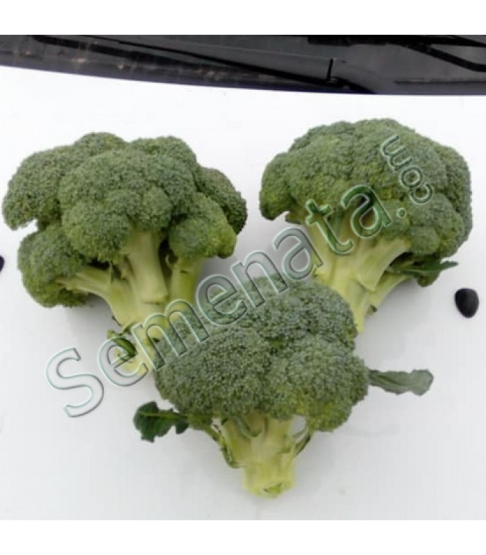 Seeds broccoli Principe