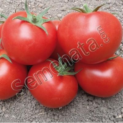Seeds of Tomato Berno Royal Sluis
