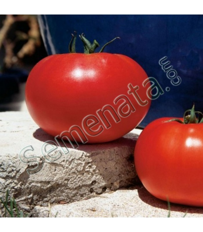 Hybrid tomato seeds Leonora Clause
