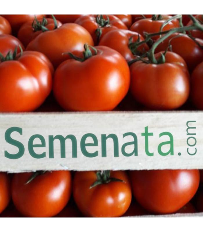 Семена оранжерийни домати Партова (Partova)