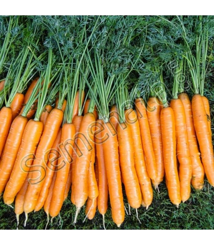 Семена за хибридни моркови Карвора (Carvora F1)