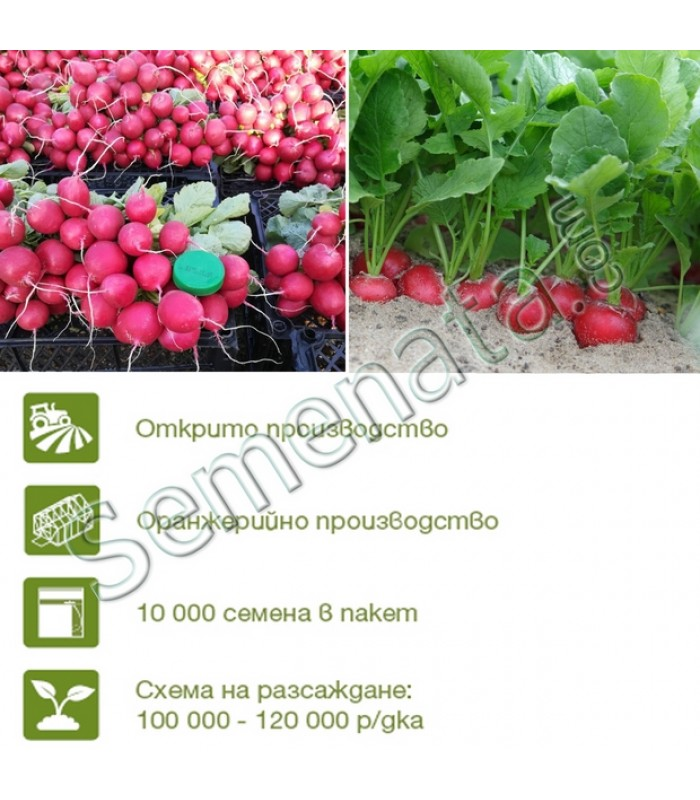 Семена за репички Стелар (Stellar)