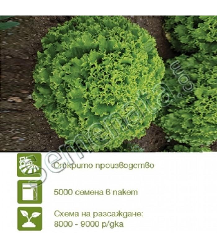 Seeds Syngenta Vignole lettuce