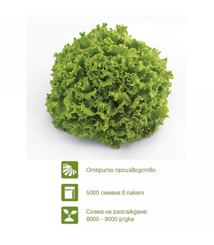 Семена за салата Олеоле (Oleole)
