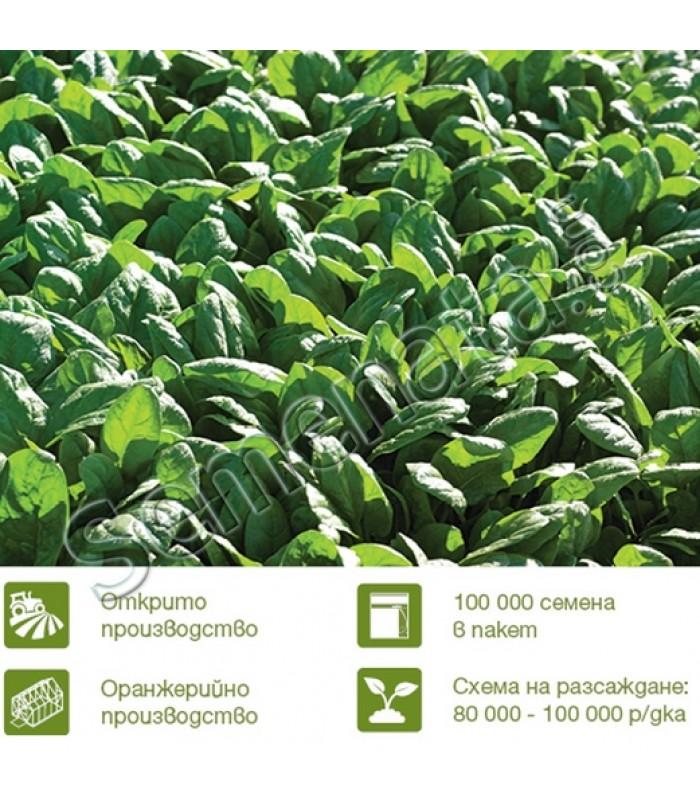 Семена за спанак Одисей ( Odisey F1) топ цена