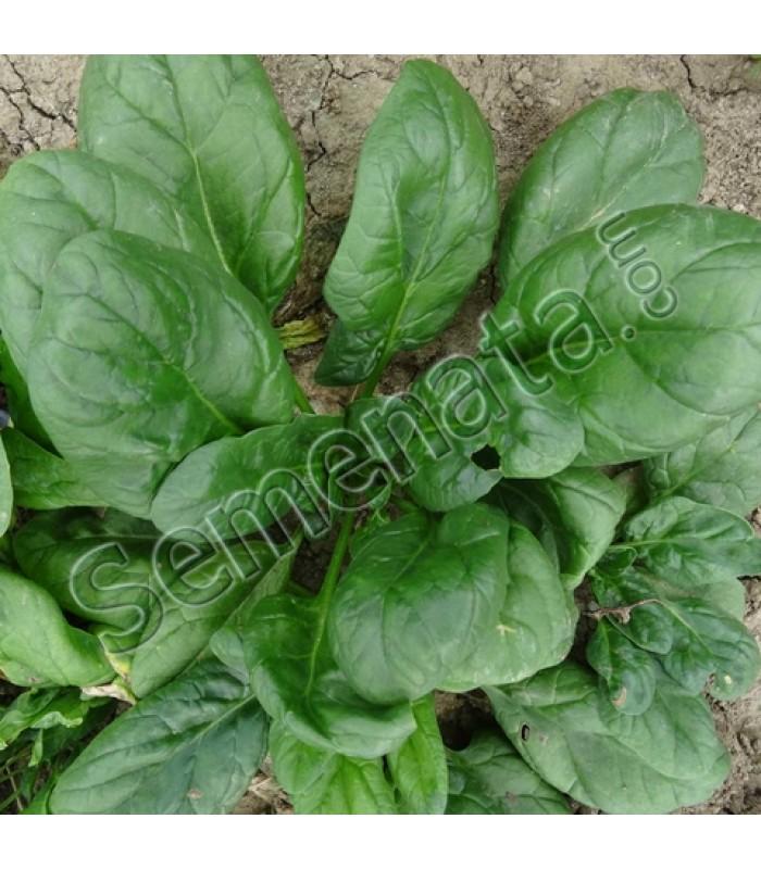 spinach Selesta F1