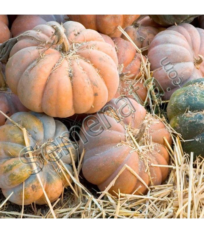 Семена тикви Мускат де Прованс (Muscat de Provence F1)