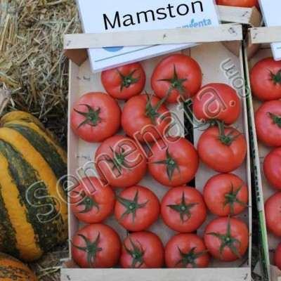 Мамстон (Mamston)