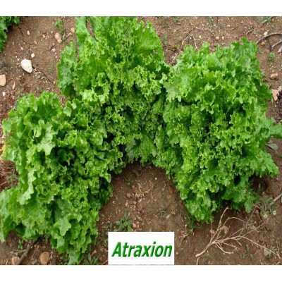 Атракцион(Atraxion)